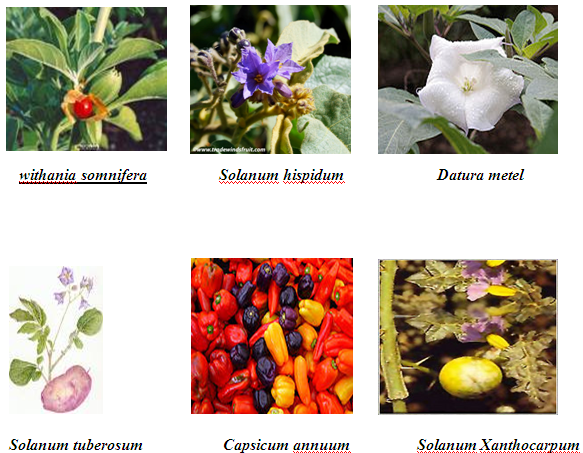 thesis of antimicrobial activity of medicinal plants Antimicrobial activity of a few medicinal plants against gram negative bacteria a john de britto, d herin sheeba gracelin and p benjamin jeya rathna kumar.